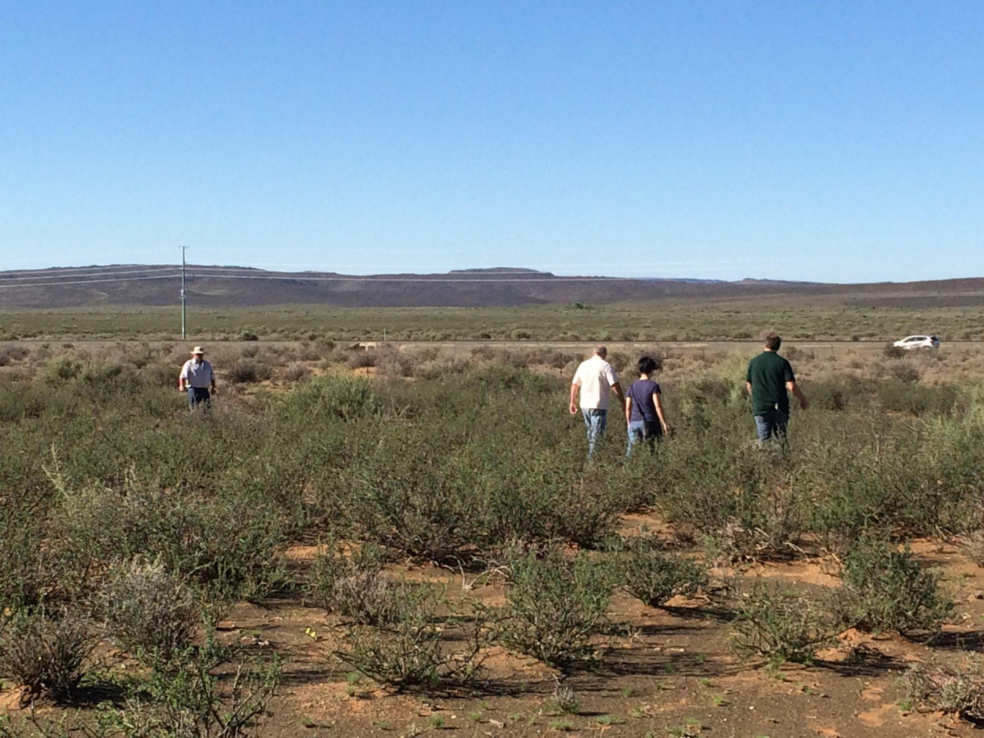 Karoo Site